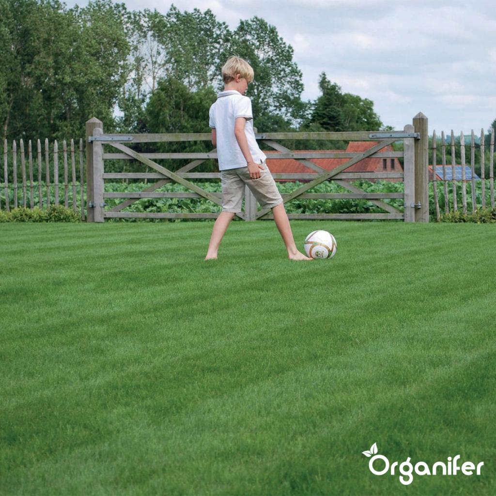 organifer Speel en Sport gazon